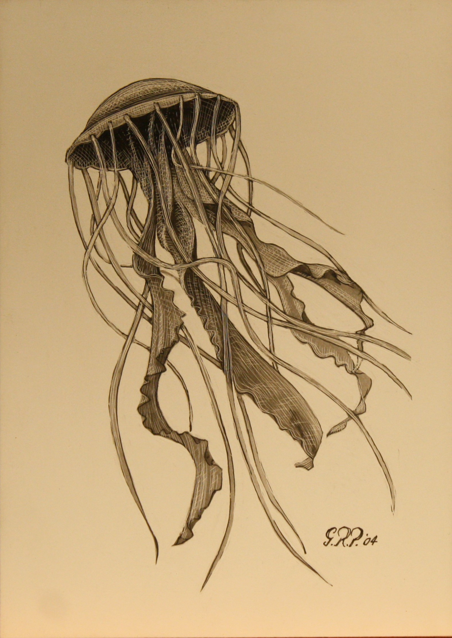 jellyfish-sold